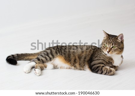 Beautiful cat isolated on white background. - stock photo