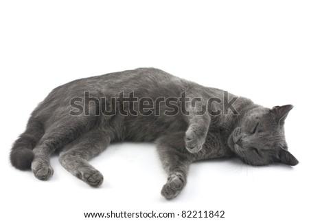 Beautiful cat isolated over white background - stock photo
