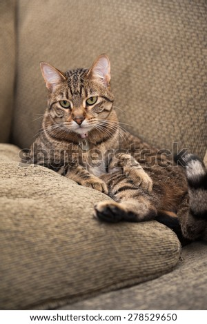 Beautiful cat lies awkwardly on the couch, nestled between the back cushion and a matching pillow - stock photo