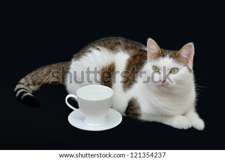 Beautiful cat lying on the black background near to white cup