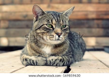 Beautiful cat lying on wooden pallets - stock photo