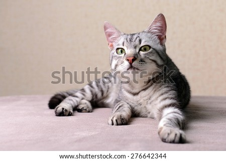 Beautiful cat on beige background - stock photo