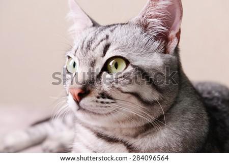 Beautiful cat on beige background - stock photo
