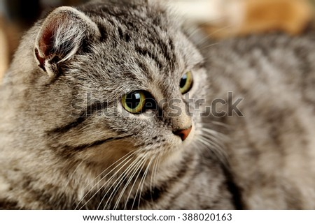 Beautiful cat on warm plaid, close up