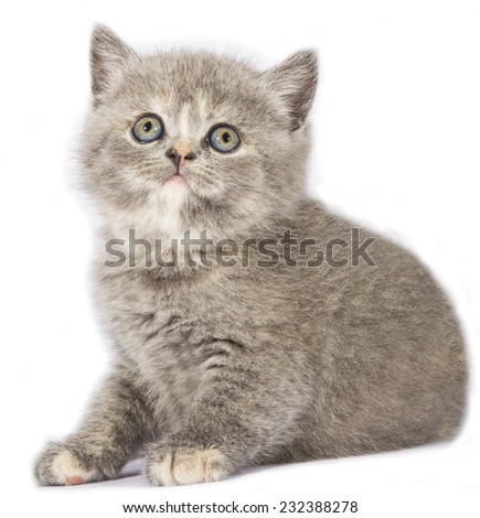 Beautiful cat on white background.