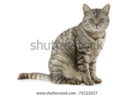 Beautiful cat ,on white background.
