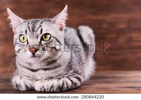 Beautiful cat on wooden background - stock photo