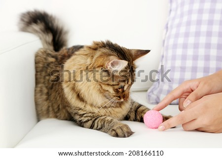 Beautiful cat playing on sofa - stock photo