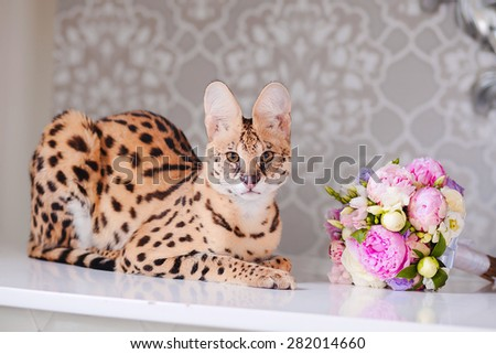 Beautiful cat serval sitting on table with bouquet of flowers - stock photo