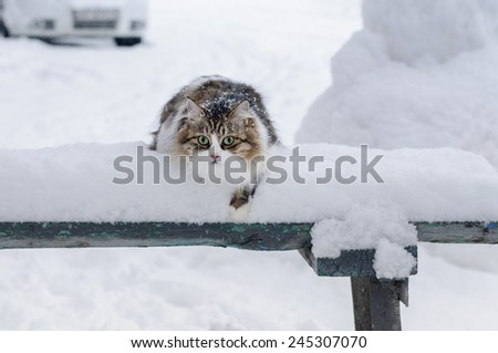 Beautiful cat sits on a snow-covered bench - stock photo