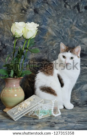 Beautiful cat sitting near to vase with the white roses and the casket with beads - stock photo