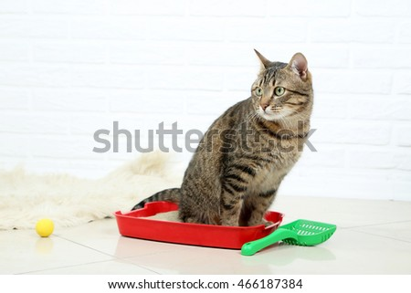 Beautiful cat sitting on a toilet tray
