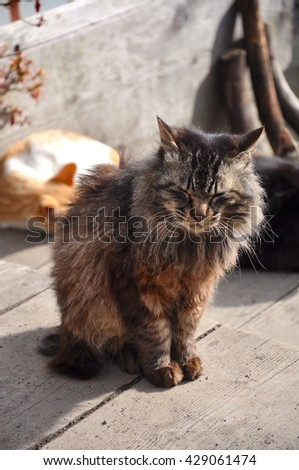 Beautiful cat sitting on old wooden floor with warm from the sun - stock photo