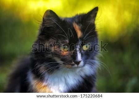 Beautiful cat sitting on the green grass. Portrait - stock photo