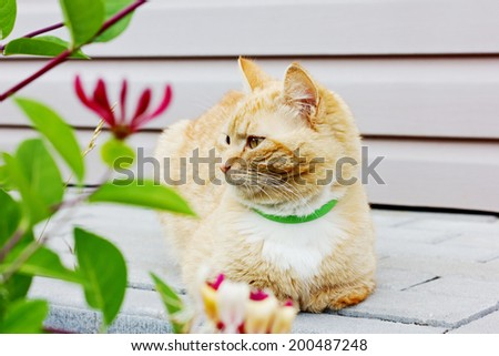 beautiful cat sitting on the road and looking into the distance - stock photo