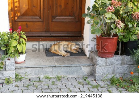 Beautiful cat sleeping in front of the door - stock photo