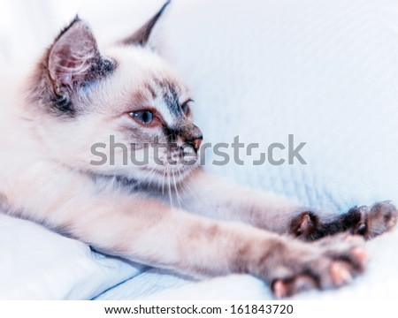 beautiful cat trying to stretch to relax - stock photo