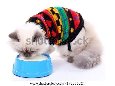 Beautiful cat with bowl of milk isolated on white - stock photo
