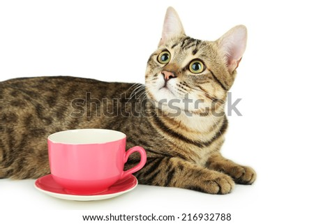 Beautiful cat with cup on white background