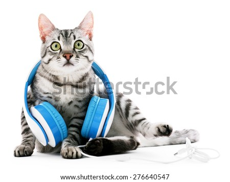 Beautiful cat with headphones isolated on white