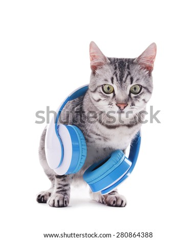 Beautiful cat with headphones isolated on white - stock photo