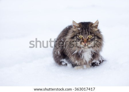 Beautiful cat without home freezing outside on snow in winter