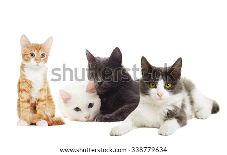 beautiful cats on a white background