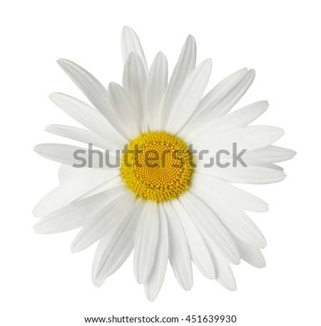Beautiful chamomile flower isolated on white