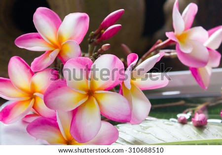 beautiful charming aroma flower plumeria made  more classic with vintage and boutique look for spa decoration  - stock photo