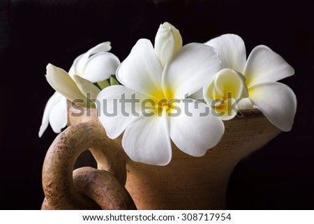 beautiful charming aroma white flower plumeria in big classic baked clay vase made a corner in house  more classic with vintage and boutique look  - stock photo
