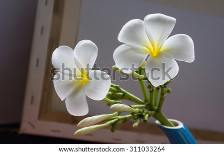 beautiful charming aroma white flower plumeria made  more classic with vintage and boutique look for spa decoration  - stock photo