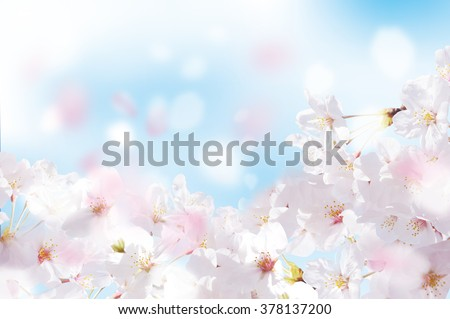 Beautiful cherry landscape - stock photo