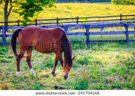 Beautiful chestnut mare on a farm in Central Kentucky - stock photo