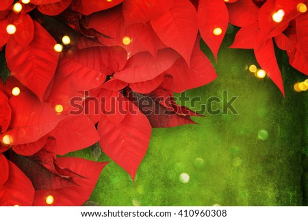 beautiful christmas background with red poinsettia - stock photo