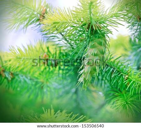 Beautiful  Christmas tree with pine cone  - stock photo