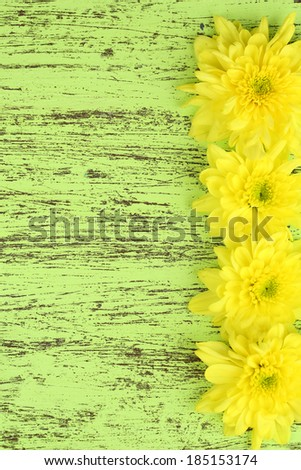 Beautiful chrysanthemum flowers on wooden table close-up - stock photo