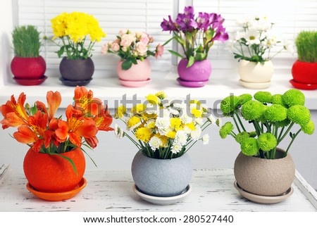Beautiful chrysanthemum in pots on windowsill - stock photo