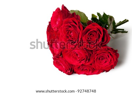 beautiful close-up rose over white background