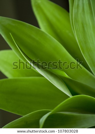 Beautiful close up shot of a fresh green agave plant - stock photo