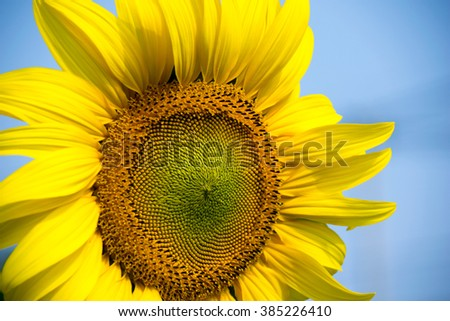 Beautiful Close up sunflower and blue sky