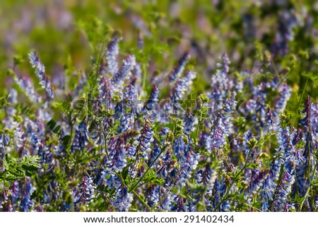 beautiful closeup violet flowers - stock photo