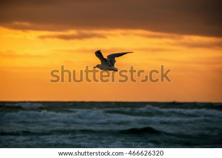 Beautiful clouds at sunset and flying seagulls
