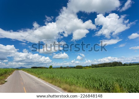 beautiful clouds in blue sky on Sugarcane field