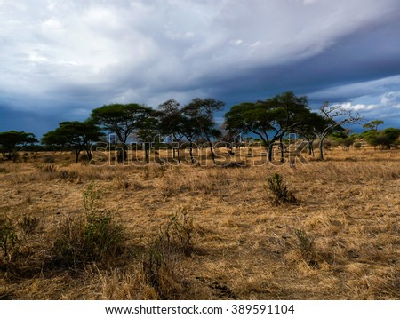 beautiful cloudscape, landscape in Serengeti national park Tanzania.