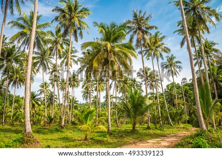 Tree Plantation Stock Images Royalty Free Images