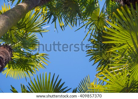 Beautiful Coconut palm trees perspective view - stock photo