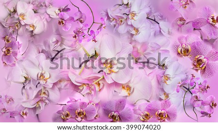 Beautiful collage background of orchid flowers. Phalaenopsis orchid flower is like a tropical butterfly. - stock photo