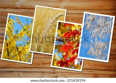 beautiful collection of  images with four seasons of the year on wooden background - stock photo
