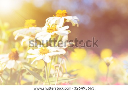 beautiful color flower for background design soft and blur style