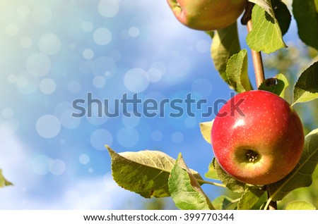 Beautiful color fresh apples standing on a branch of the tree in the orchard against the sky close-up (greetings postcard - concept) - stock photo
